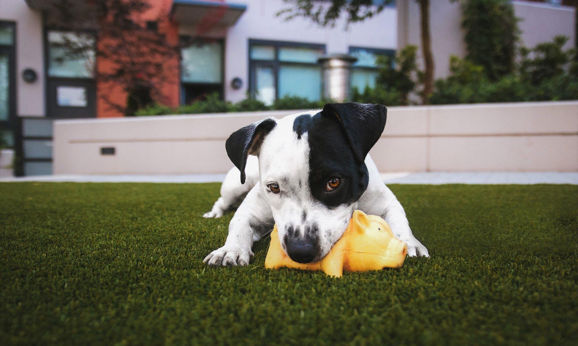 adopter chien bienfaits santé Samassur