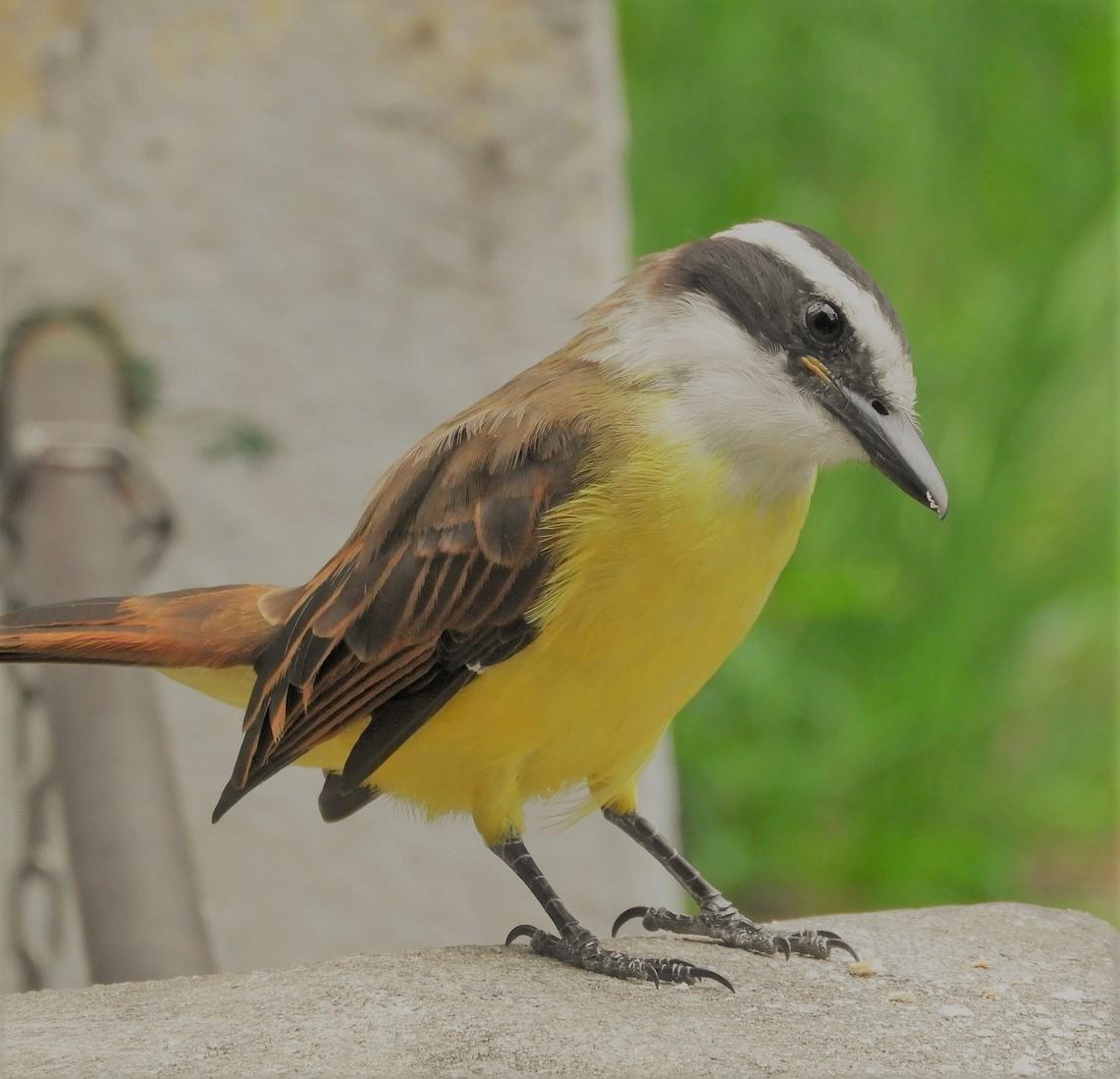 oiseau-biodiversite